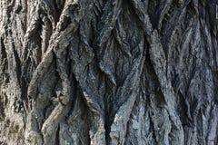 Bakgrund av trädskället flätade trådar för modell Arkivbilder