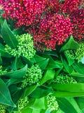 Bakgrund av tropiska Leaves Ljust - gröna sidor i stilen av målning Botanisk bakgrund av naturligt royaltyfria foton