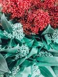 Bakgrund av tropiska Leaves Ljust - gröna sidor i stilen av målning Botanisk bakgrund av naturligt royaltyfri bild