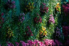 Bakgrund av växtväggen royaltyfri bild