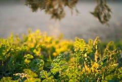 Bakgrund av vårgräs Royaltyfria Foton