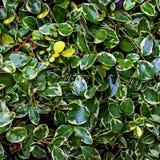 Bakgrund av våta sidor för gräsplan Arkivfoton