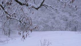 Bakgrund av vinterskogen med Snö-täckte filialträd stock video