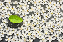 Bakgrund av vita blommor och den svarta stenen med det gröna bladet i t Royaltyfri Bild