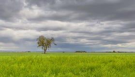 Bakgrund bildade vid ett landskap av grönt gräs, molnig himmel och det ensamma trädet fotografering för bildbyråer