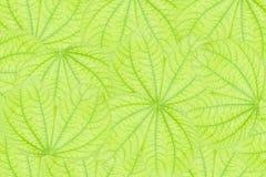 bakgrund blad seamless Royaltyfria Bilder