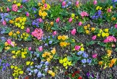 bakgrund blommar fjädern Arkivbilder
