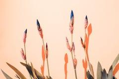 bakgrund blommar irisen royaltyfri foto
