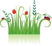 bakgrund blommar nyckelpigan Arkivbild