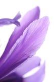 bakgrund blommar petals Royaltyfri Fotografi