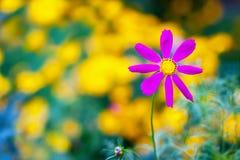 1 bakgrund blommar pink Royaltyfria Bilder