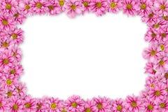 1 bakgrund blommar pink Fotografering för Bildbyråer