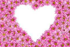 1 bakgrund blommar pink Royaltyfria Foton