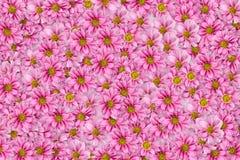 1 bakgrund blommar pink Arkivfoto