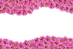 1 bakgrund blommar pink Royaltyfri Fotografi