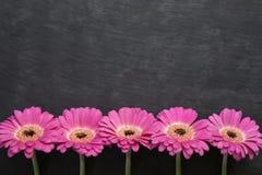 1 bakgrund blommar pink Arkivbild