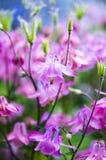 bakgrund blommar pink Arkivbilder