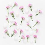 1 bakgrund blommar pink Lekmanna- lägenhet Arkivfoto