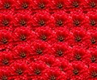 bakgrund blommar red Arkivfoton