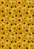 bakgrund blommar ringblommayellow Arkivfoton