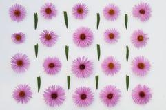bakgrund blommar rosa white Arkivfoto