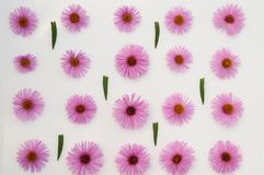bakgrund blommar rosa white Royaltyfri Bild
