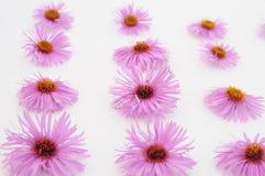 bakgrund blommar rosa white Fotografering för Bildbyråer
