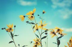 bakgrund blommar skyyellow Arkivfoton