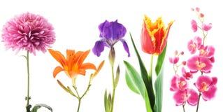 bakgrund blommar white Royaltyfria Bilder