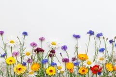 bakgrund blommar white Bästa sikt, lekmanna- lägenhet Arkivbilder