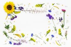 bakgrund blommar white Bästa sikt, lekmanna- lägenhet Royaltyfria Bilder