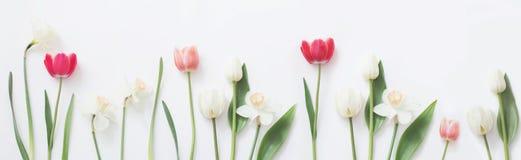 bakgrund blommar white för illustrationfjädervektor royaltyfri foto