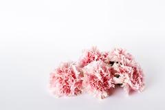 bakgrund blommar white Lekmanna- lägenhet, bästa sikt Royaltyfri Foto