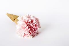 bakgrund blommar white Lekmanna- lägenhet, bästa sikt Royaltyfria Bilder