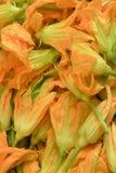 bakgrund blommar zucchinien Arkivbilder