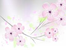 bakgrund blomstrar den blom- fjädern för Cherryet Stock Illustrationer