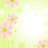 bakgrund blomstrar den gröna pinkseten för blommor Arkivfoton