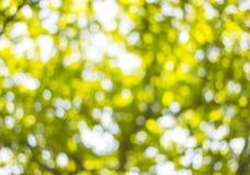 Bakgrund Bokeh från solen under skuggan av träd Fotografering för Bildbyråer