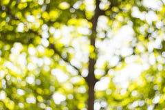 Bakgrund Bokeh från solen under skuggan av träd Arkivbilder