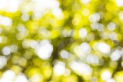 Bakgrund Bokeh från solen under skuggan av träd Royaltyfri Bild