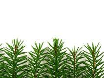 bakgrund branches spruce Royaltyfria Foton