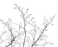 bakgrund branches white Royaltyfri Foto