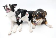 bakgrund dogs white tre royaltyfri foto