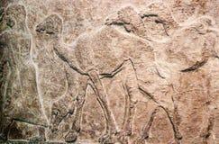 Bakgrund - egyptisk basrelief som snider i stenen av åtskilliga kamel som följer en man arkivbild