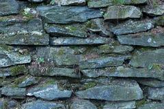 Bakgrund eller textur av en vägg för torr sten som täckas med laver royaltyfri bild
