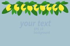 Bakgrund En girland av gula citroner och gröna sidor upptill på ljus - blått Royaltyfri Foto
