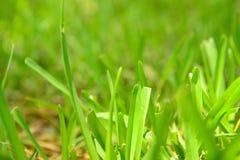 bakgrund färgad detaljgräswhite Royaltyfria Foton