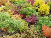 bakgrund färgat gräs Arkivfoto