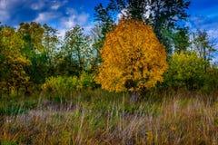 Bakgrund för abstrakt begrepp för ändring för skogsmarkänghöst royaltyfri foto