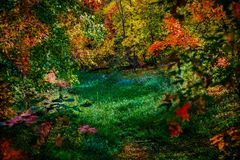 Bakgrund för abstrakt begrepp för ändring för skogsmarkgläntahöst fotografering för bildbyråer